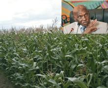 ME ABDOULAYE WADE SUR LA GOANA: 'Les conditions sont réunies pour avoir de bonnes récoltes'