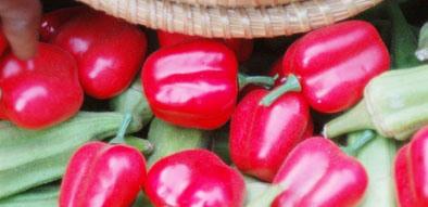 GROSSE ARNAQUE AGRICOLE: Certains legumes exposés lors de la fête de la Goana était en plastique
