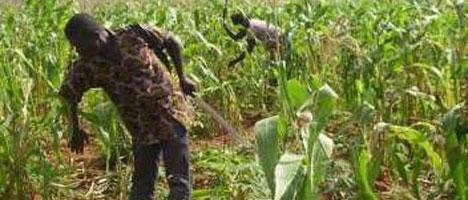 APRES LA GOANA: Wade lance « la révolution verte »