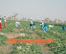 CO-DÉVELOPPEMENT FRANCE SENEGAL : 221 projets financés par les émigrés