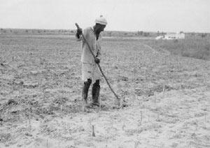 L'agriculture sénégalaise ne profite pas de l'argent des subventions