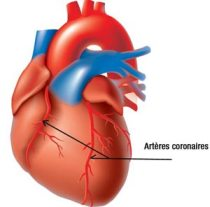 AUGMENTATION DES MALADIES CARDIOVASCULAIRES : Un Sénégalais sur deux a un taux de cholestérol supérieur à la normale