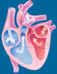 ÉTUDE SUR LA DÉGRADATION DE L'ÉTAT DE SANTÉ DES SÉNÉGALAIS: 25% des Dakarois et 20% des populations rural souffrent d'hypertension artérielle