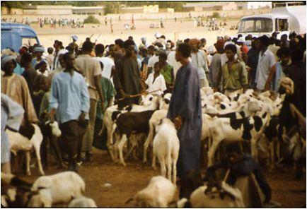 TABASKI 2012 AU SENEGAL La crise malienne risque de paralyser l'approvisionnement en moutons
