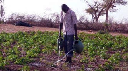 TOURNEE DANS QUATRE REGIONS : Le CNCR minimise les 34 milliards d'appui à la politique agricole