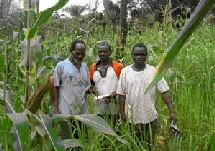 RENFORCEMENT DES CAPACITÉS DES AGRICULTEURS DE L'AFRIQUE SUBSAHARIENNE: Plus de 02 milliards du Japon au Projet GCP/RAF/411/JPN