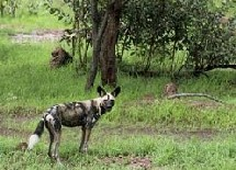 RESERVE MONDIALE DE LA BIOSPHERE EN PERIL: Les jours du Niokolo-Koba désormais comptés