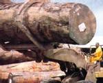 Ziguinchor : Les exploitants forestiers crient leur détresse
