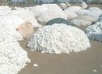 Production de coton : La Sodefitex revoit ses ambitions à la baisse