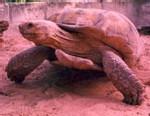 Disparition des tortues marines : Les populations de Gandiol interpellent les autorités