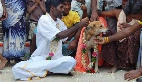 [PHOTO] Un Indien se marie à une chienne pour chasser une malédiction