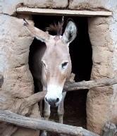 Mame Abdou Diop accusé d'avoir voulu entretenir des relations intimes avec un âne de sexe masculin