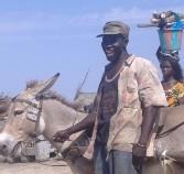 MAGAL DE TOUBA ENTRE LE COMMERCE ET LE TRANSPORT: Les bonnes affaires de Borom charrette et Saa tailleur