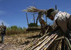 PRODUCTION DE BIOCOMBUSTIBLES: Les risques qui menacent les petits producteurs