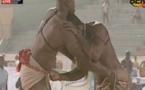 Vidéo- Modou Anta domine Zarco et le terrasse, Tout ce que vous n'avez pas vu à la télé en 4mn… Regardez!!