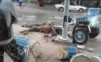 Photo Louga: Un charretier échappe à la mort, son cheval meurt électrocuté