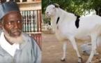 Gagner un mouton à la loterie, les précisions d'Oustaz Alioune Sall … Ecoutez