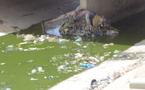 Son troupeau chassé : le berger furieux jette l'enfant de 9 ans dans le canal