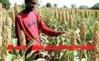 PROJET « JEUNES DANS LES FERMES AGRICOLES » : Des techniciens agricoles pour accompagner les bénéficiaires