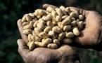 Sénégal : Hausse de 36% des produits arachidiers durant les 7 premiers mois de 2015