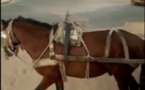 Vidéo incroyable: ce cheval comprend le Wolof… Regardez