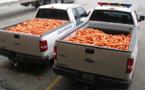 De la marijuana dissimulée dans de fausses carottes