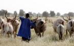Horreur à Linguère – Un jeune berger battu à mort par son cousin