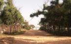Découverte macabre à la forêt classée de Mbao – Un homme trouvé mort pendu à un arbre