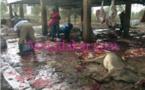 Découverte d'un abattoir d'ânes Chinois