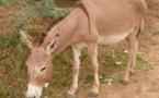 Vidéo- De la viande d'âne sur le marché