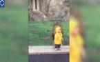 Vidéo. Un lion attaque un enfant dans un zoo. Regardez
