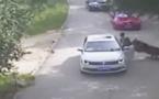 Un tigre dévore une femme dans un parc animalier (vidéo)