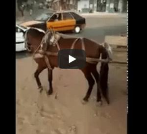 Incroyable, ce que fait ce cheval !