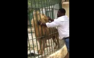Eumeu Séne dompteur de lion. Regardez !