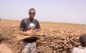 (Vidéo) Bagarre à Khelcom : Tange Tandian répond à Assane Diouf « Dieugeulna… »